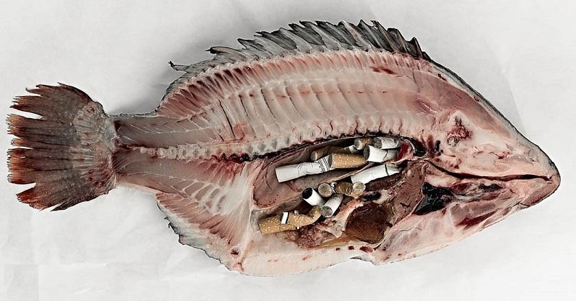 你會向魚缸扔煙頭嗎?