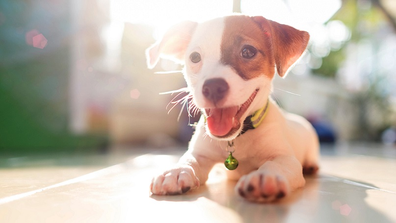 想親密接觸小狗,居然發覺它有口臭!緣故在這兒